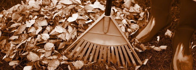 raking leaves proper technique